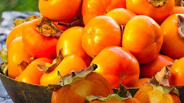 Fésűkagyló kalória - Lehet fogyni fésűkagylóval? - Diet Maker