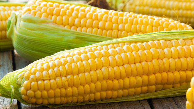 Kukorica kalória