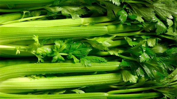 Rebarbara kalória - Lehet fogyni rebarbarával? - Diet Maker
