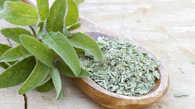 zsálya gyógynövény előnyei a fogyás)